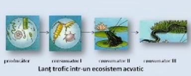 Ecosisteme